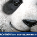 Beyond the Black and White of Googles Panda Update